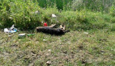 Köpeği döverek öldüren şüpheli ilçeden kaçtı