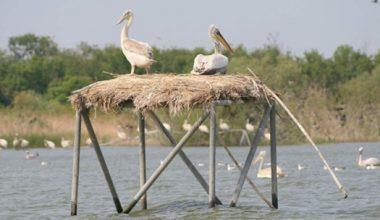 Kuşcenneti kesin korunacak hassas alan ilan edildi